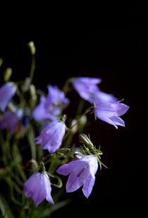 Glockenblumen by Heidrun Lutz