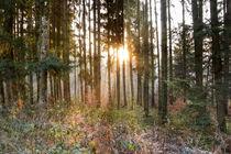 Sonnenaufgang im nebeligen Wald von Gerald Wacker