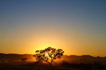 Sonnenaufgang hinter Baum  by Andrea  Hergersberg