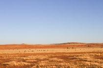 Namib Nauklufts endlose Weite von Andrea  Hergersberg