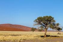 Baum vor Düne von Andrea  Hergersberg