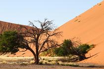 Kargheit auf Sand / Namib Naukluft NP  von Andrea  Hergersberg