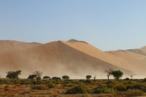 Sandsturm von Andrea  Hergersberg