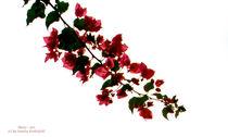 Blütenzauber von Sandra Probstfeld