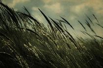 Moments of melancholy - Momente der Melancholie von Nicole Frischlich