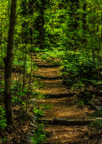 Dappled Sunlit Forest by Jon Woodhams