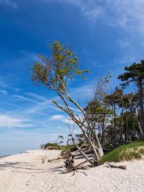 Ostseeküste von Rico Ködder