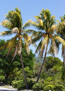 Coconut Palm Trees In Key West von John Bailey