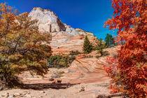 Bright Fall Colors At Zion von John Bailey