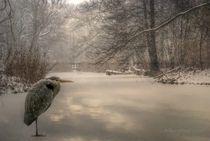 Wintertime von Shiva B.
