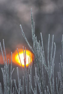 Eiskalter Morgen by Irmtraut Prien
