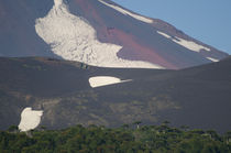 Llaima volcano slope and Araucaria forest von Víctor Suárez