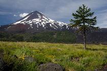 Araucaria and Llaima volcano von Víctor Suárez