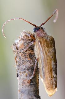Beetle I von Víctor Suárez