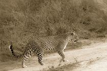 Leopardin  von Andrea  Hergersberg
