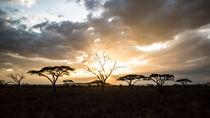 Sonnenuntergang im Amboseli NP  von Andrea  Hergersberg
