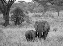 Elefantenmutter mit Baby von Andrea  Hergersberg