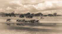 Elefantenherde zieht am Wasser entlang (sepia) von Andrea  Hergersberg