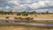 Elefantenherde am Wasser / Wasserspiegelung von Andrea  Hergersberg