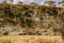 Zwei Elefantenherden treffen sich vor einer Felswand by Andrea  Hergersberg