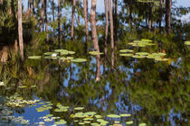 Lily Pads Floating On Reflections von John Bailey