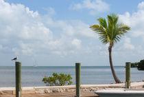 Tropical Vacation von John Bailey