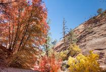 Zion Autumn Colors von John Bailey