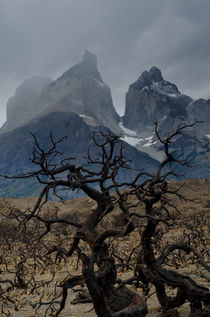 Paine Horns on burnt ground by Víctor Suárez