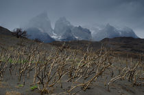 Paine Mountain Range on burnt ground by Víctor Suárez