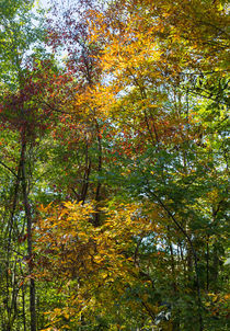Colorful Leaves von John Bailey