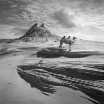 Camel Hill by Dariusz Klimczak