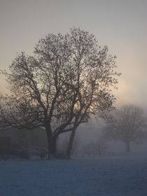 Tree in the foggy winter landscape von amineah
