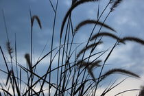 Big blade of grass under blue sky by amineah
