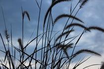 Big blade of grass under blue sky von amineah