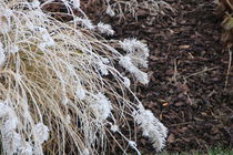 Winter grass by amineah