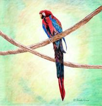 Parrot von Linda Ginn