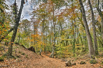 Walking Throw Jordan's Beech Wood von Marc Garrido Clotet