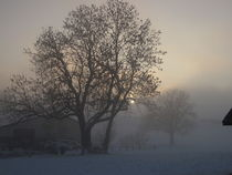 Tree in the foggy winter landscape by amineah