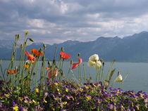 Floral Coast von amineah