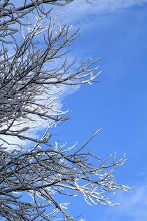schneebedeckt von Jens Berger
