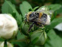 Pollenbad von Sandra Probstfeld