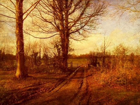 The-homestead-farm-track