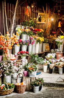 Flowers for Sale by Heather Applegate
