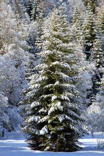 Winterwald von Jens Berger