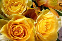 Yellow Roses von amineah