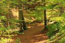 Forest von amineah