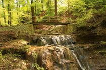 Autumn creek in forest von amineah
