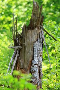 Tree Trunk von amineah