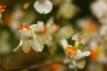 White Orchid von amineah