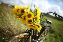 Beautiful sunflowers on a bicycle's basket von Thy Le
